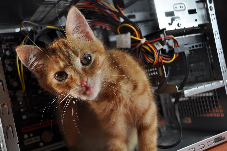 Gato em um computador